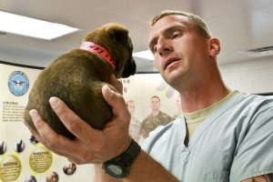 a vet checking a puppy - this is unvoidable when moving with pets