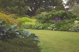 Garden is green.