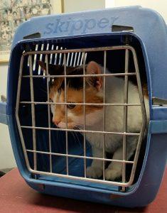 A cat in a pet carrier