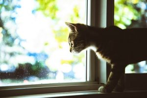 a cat looking through a window